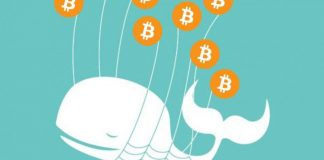 Three Reasons why Bitcoin Whales cannot Manipulate the Markets