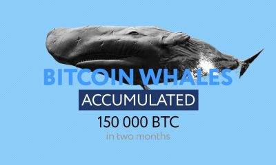 bitcoin whales accumulate  BTC