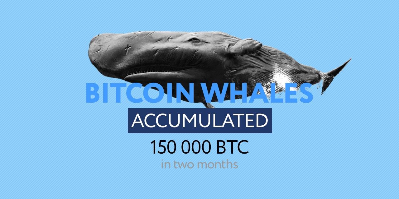 bitcoin whales accumulate  BTC